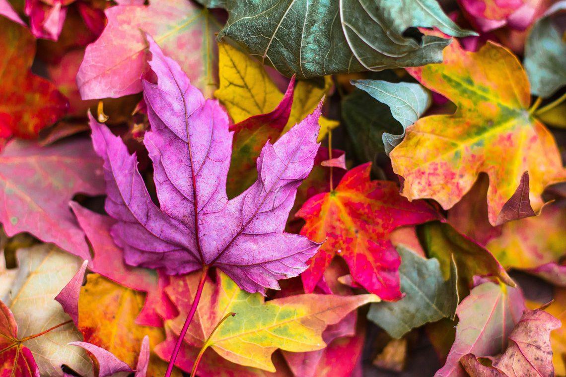 Planes para otoño