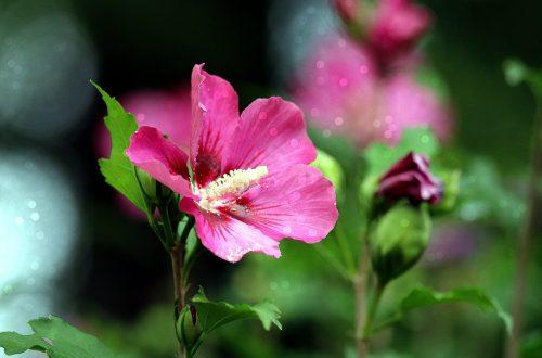 plantas beneficiosas para la piel