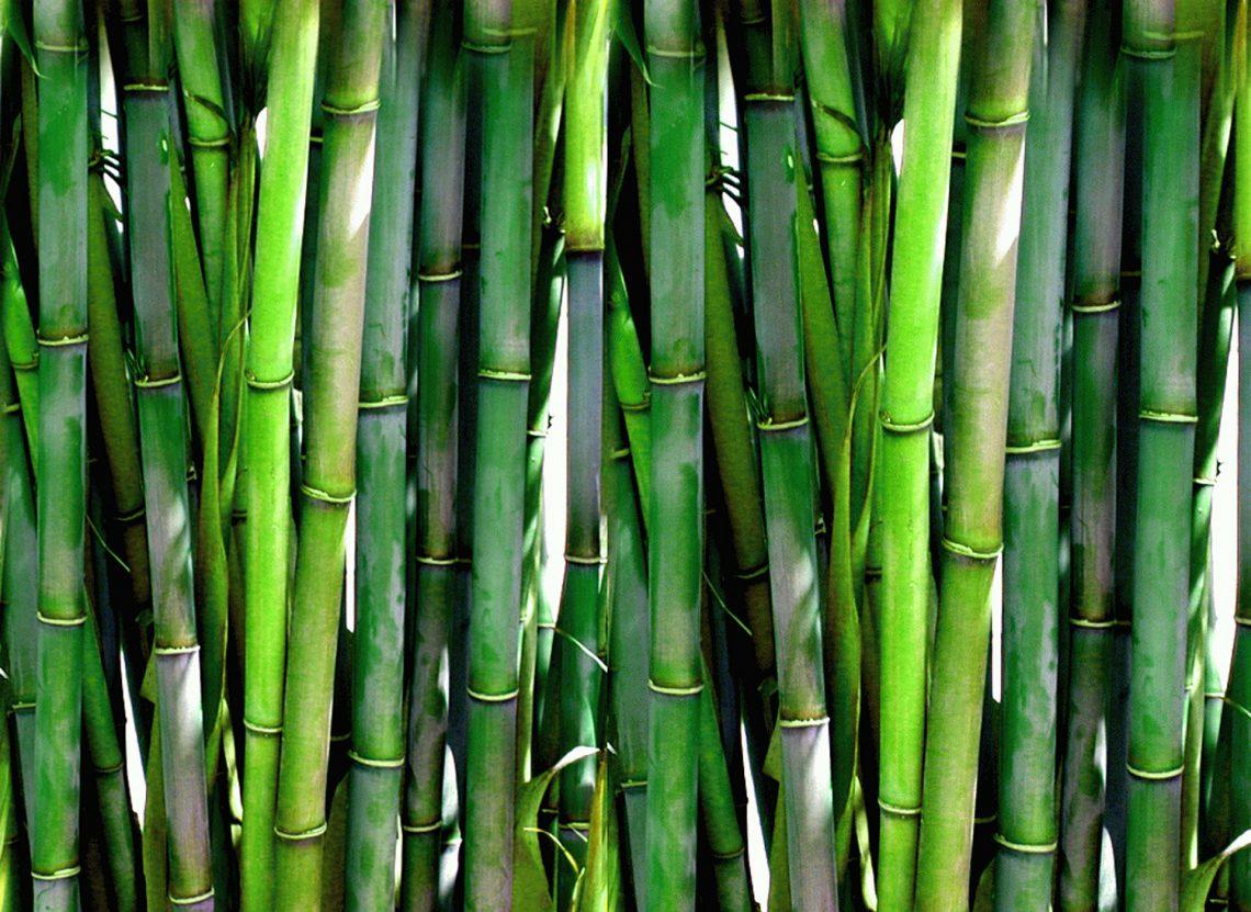 Prendas de bambú